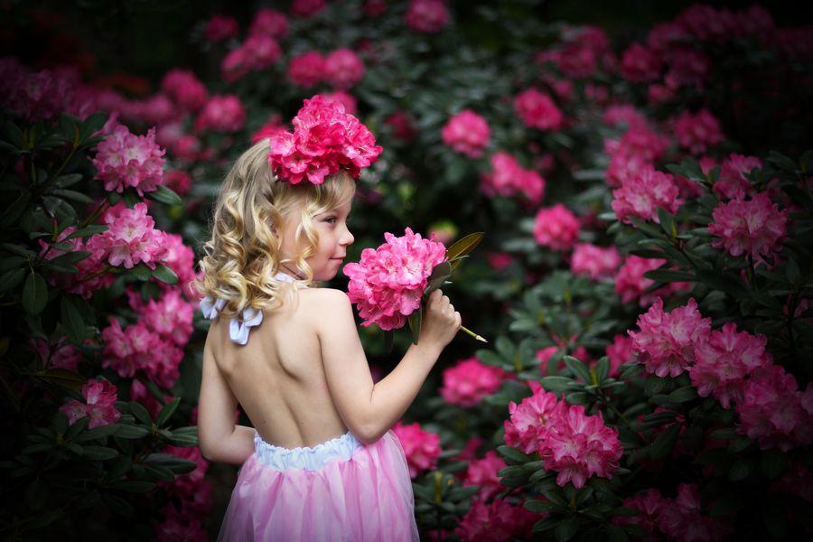 jarní rododendron